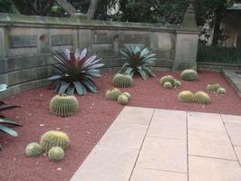 Kaktusy byly i z druhé strany vstupu..