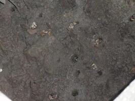 Po chvíli jsme si všimli, že v bahně žijí tisíce a tisíce malinkatých krabů