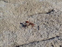 tak ještě jednou obří mravenec, kterého jsme fotili už během Ullola trecku. Janička nám řekla, že je to jeden z nejnebezpečnějších mravenců, který když kousně nebo bodne žihadlem, je to stejné jako třeba od sršně, fuj! Rychle pryč
